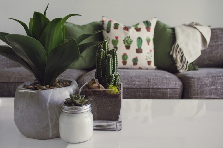 decorare-con-le-piante